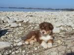 Avonaco genießt die Sonne und das Meer...